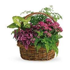Garden Basket, image
