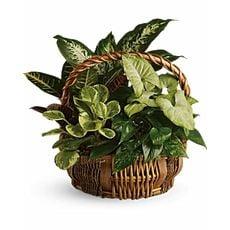 Lush Basket, image