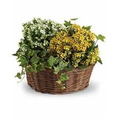 Joy Flowers Basket