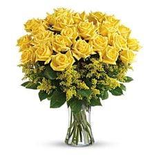 Yellow Rose Sunrise, image