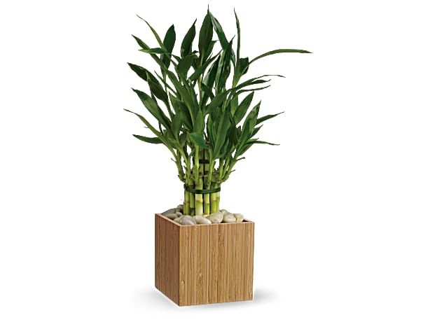 Bamboo Beauty, image